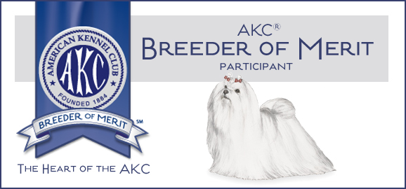 AKC Maltese Breeder of Merit