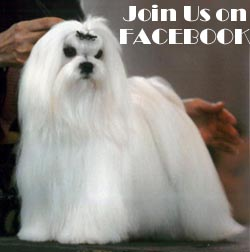 Josymir Maltese on facebook